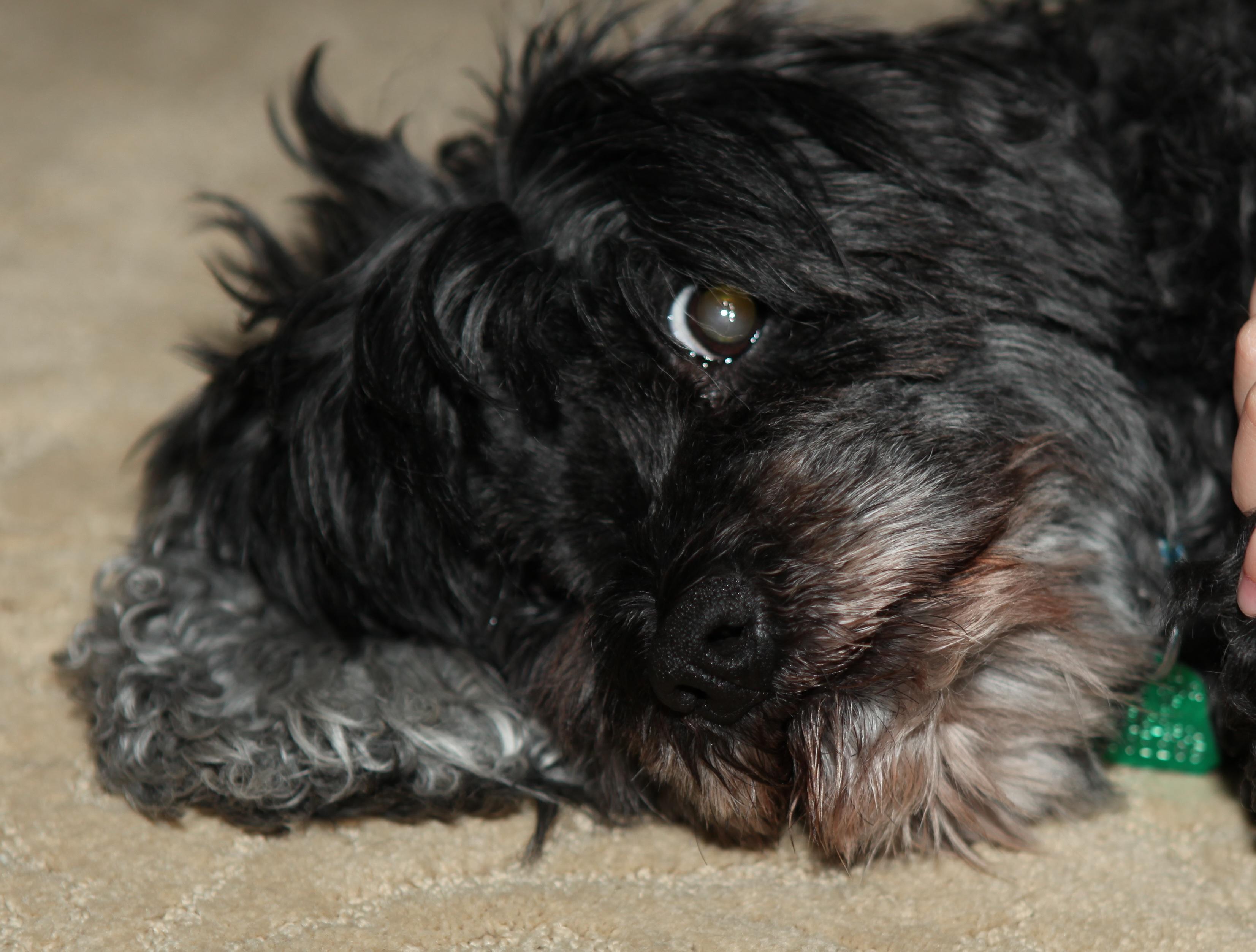 Pwd Dog Rescue